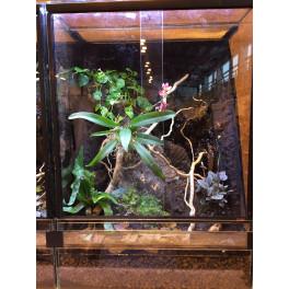 Terrarium en verre planté