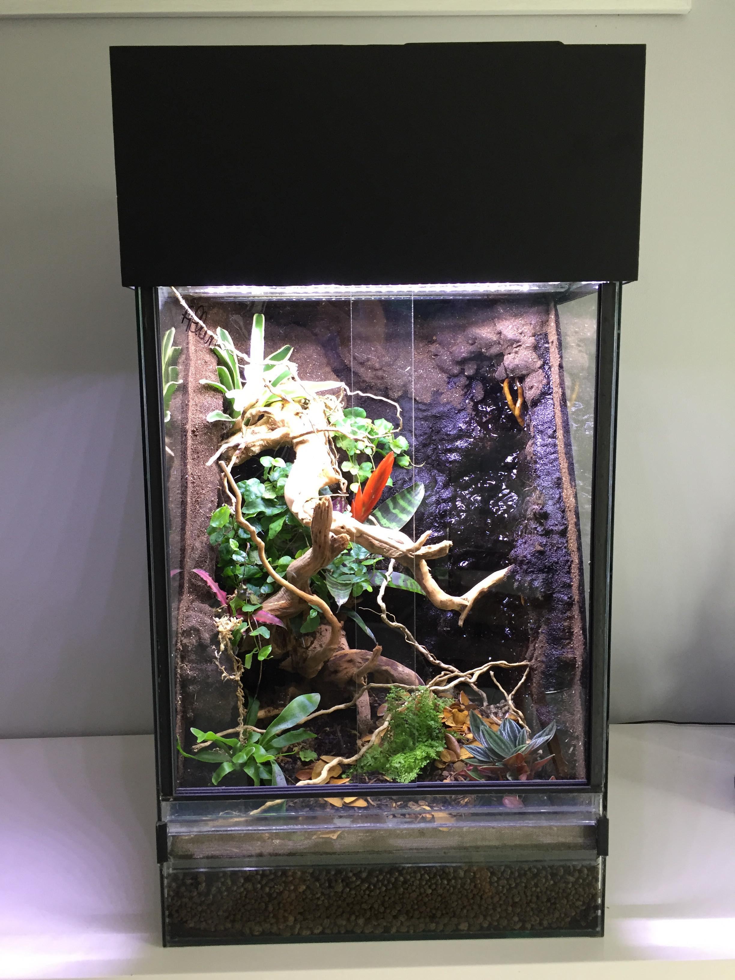 terrarium planté